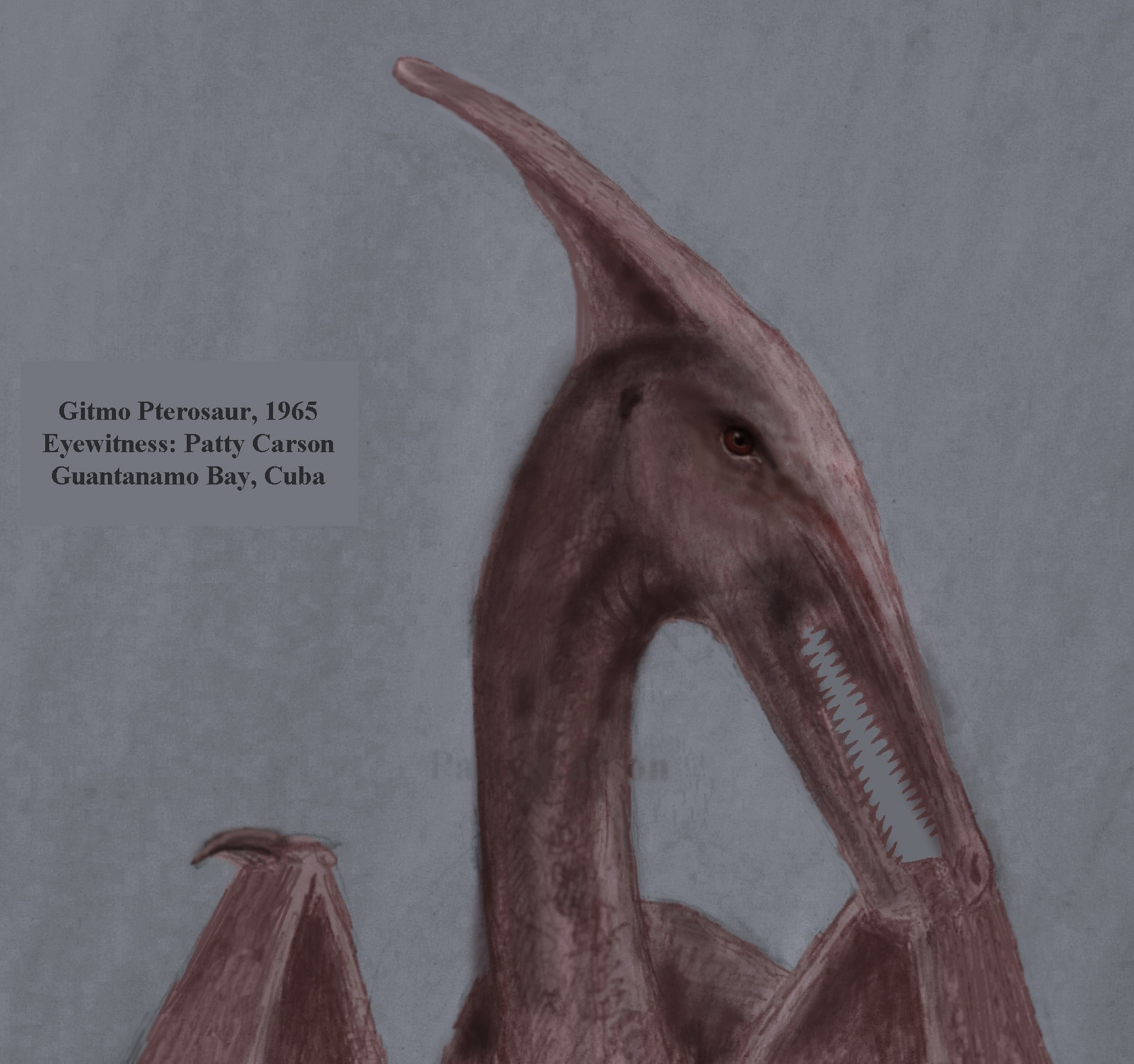 This ropen was seen by Patty Carson, who drew this sketch of the large pterosaur she encountered at Guantanamo Bay, Cuba